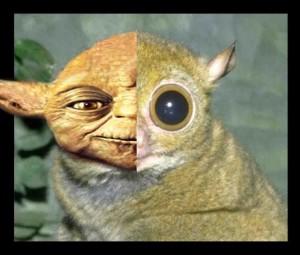 yoda tarsier